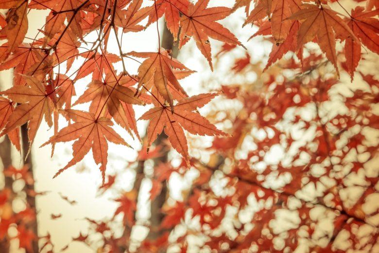 横浜【三渓園の紅葉】2019年の見ごろは?混雑状況、ライトアップ有無も紹介!