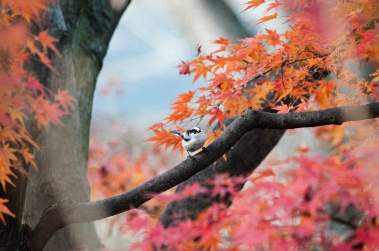 箱根【蓬莱園の紅葉】2019年の見ごろは?ライトアップや混雑状況は?