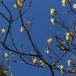 成田の梅まつり2020!開花状況や日程は?投句コンテストの参加もオススメです
