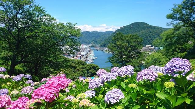 静岡:下田公園あじさい祭り